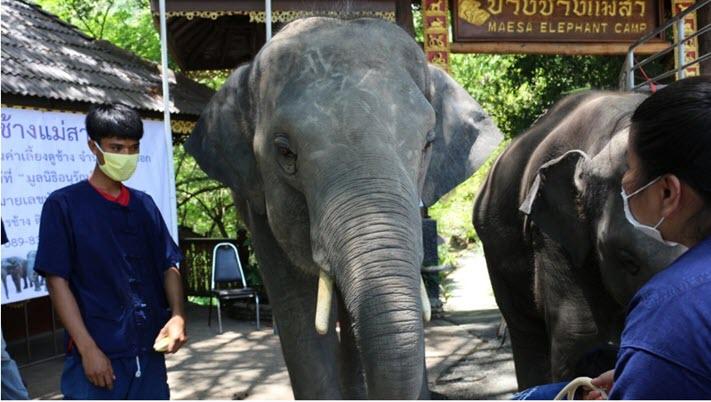 ช้างพลายดอย