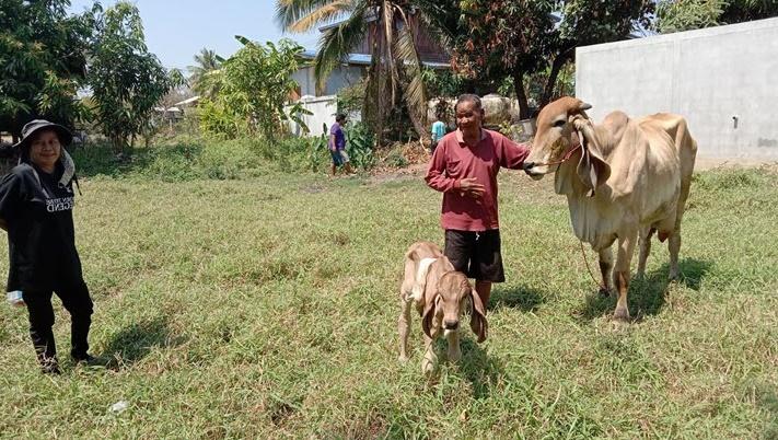ลูกวัว5ขา
